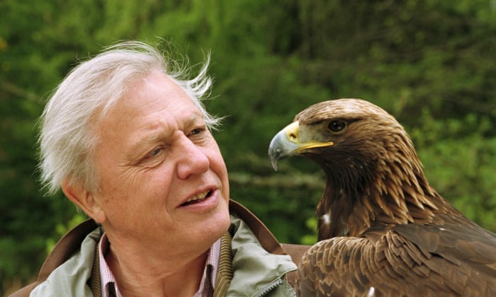 https://www.theguardian.com/tv-and-radio/shortcuts/2016/may/04/attenborough-90-wildlife-legend-top-10-tv-moments