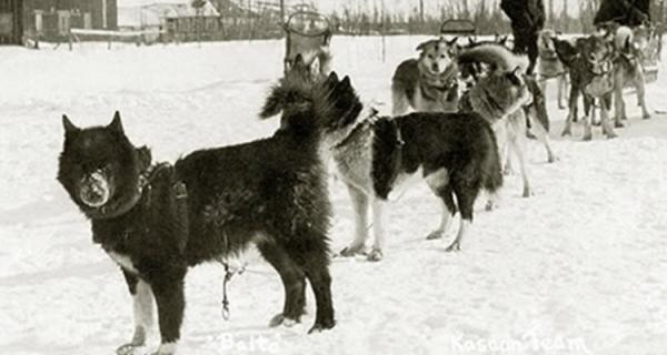 https://www.animalwised.com/the-true-story-of-balto-the-dog-that-became-a-hero-1394.html